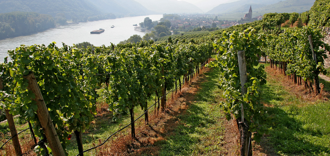 At the intersection of idyllic landscapes and regions of Wachau, Kamptal and Wagram